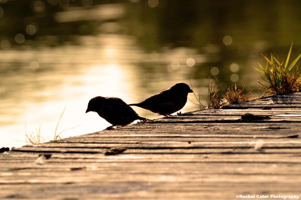 birds in the morning light Rachel Cater Photography