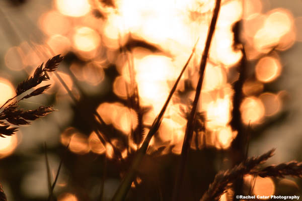Soft Morning Light Rachel Cater Photography