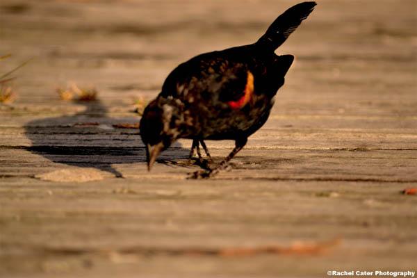 early bird rachel cater photography