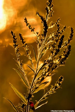 smoky light plant sunrise rachel cater photography