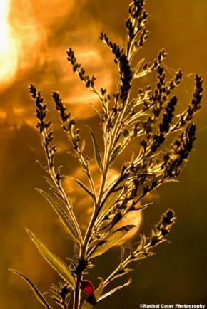 smoky light plant sunrise rachel cater photography