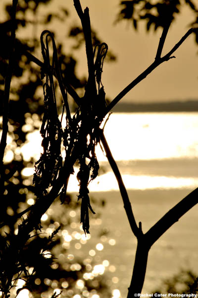 early dawn views rachel caterphotography