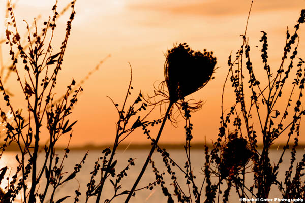 Heart in Nature Rachel Cater Photography