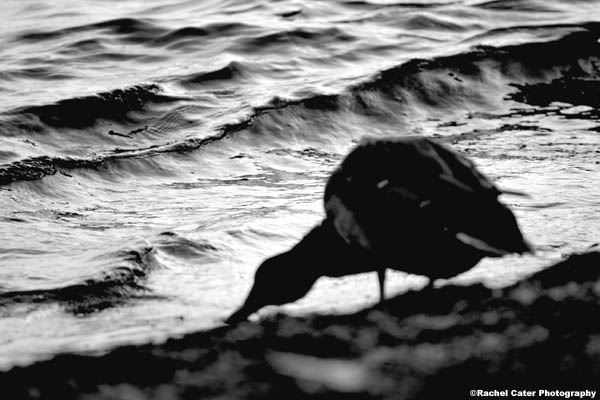 thirsty duck rachel cater photography